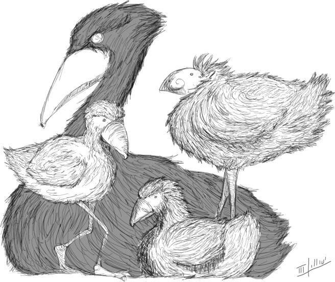 birdos